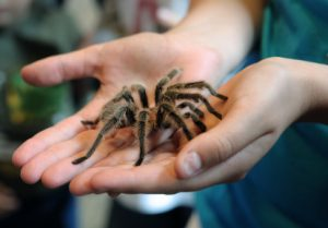 Cure a fear of spiders with hypnosis at Sean Mc Gee Hypnotherapy